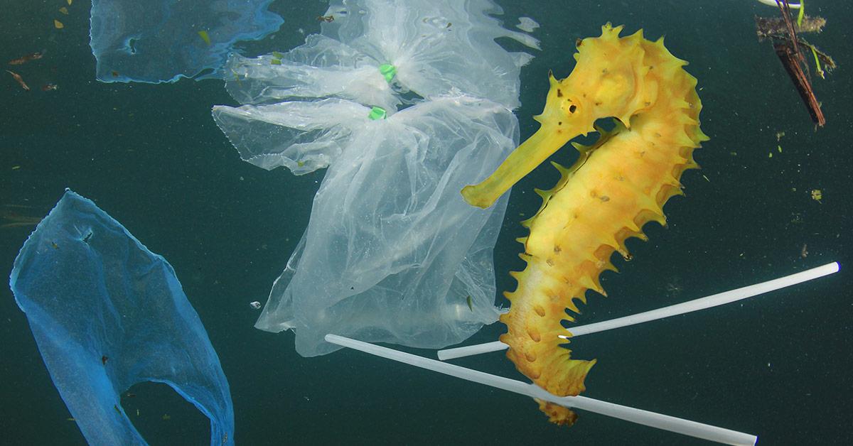seahorse among garbage in ocean