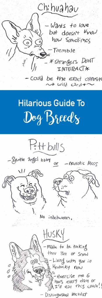 Hilarious Guide To Dog Breeds