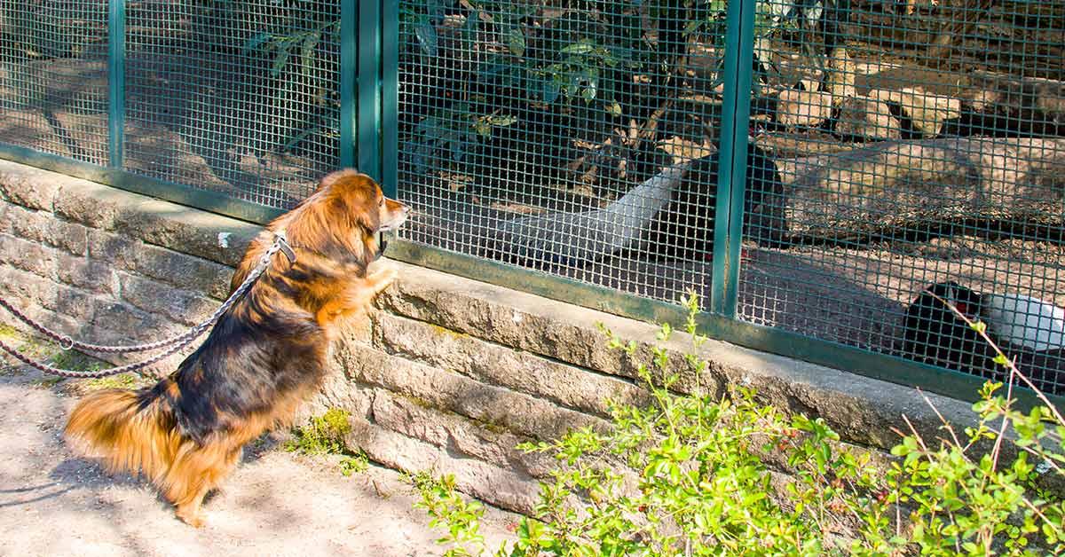 dog friendly zoo