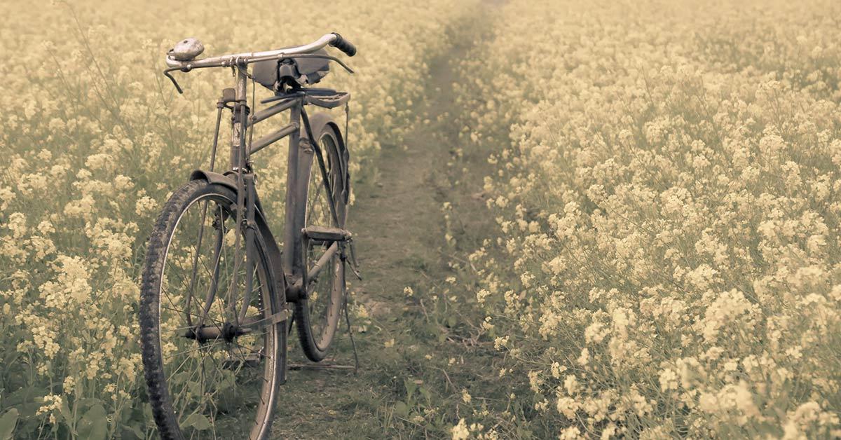 bike in a field of flowers