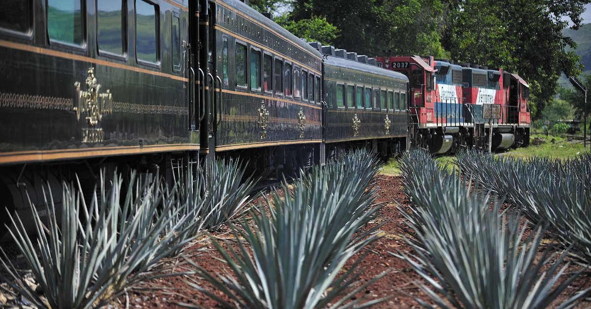 The tequila train travelling with agave plants in the foreground