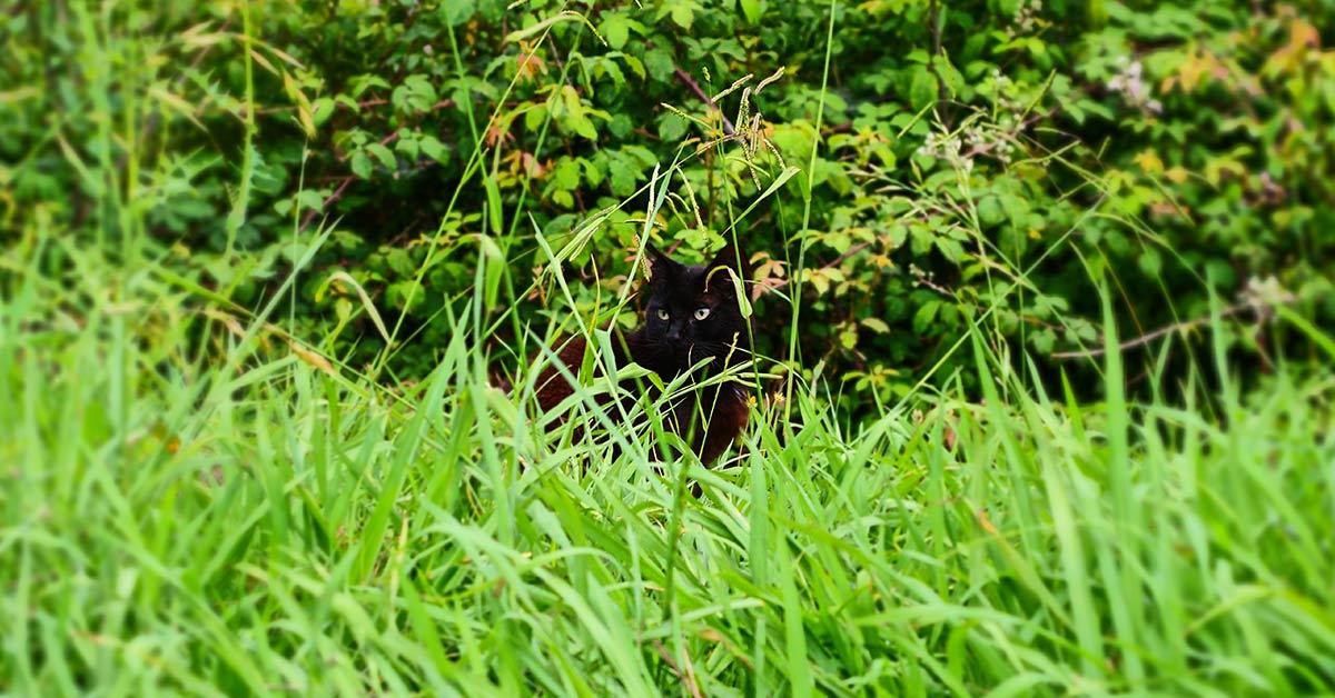 black cat hidden amongst greenery