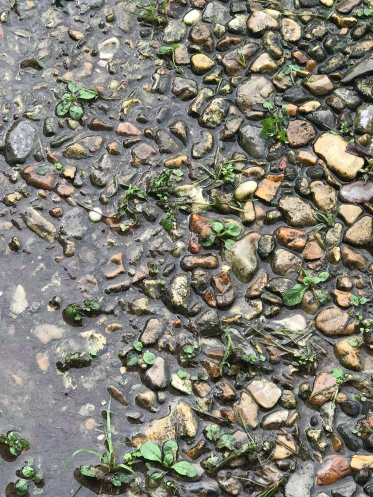 Frog hidden amongst wet rocks