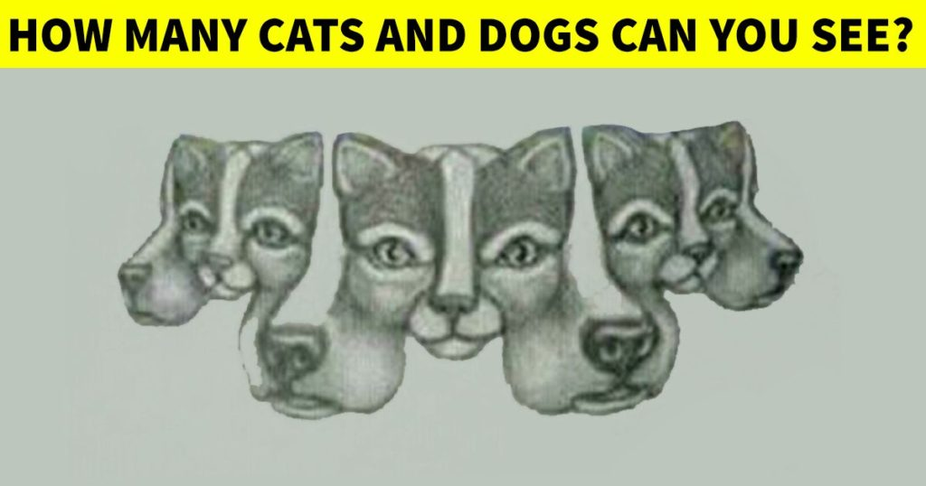 cats and dogs puzzle