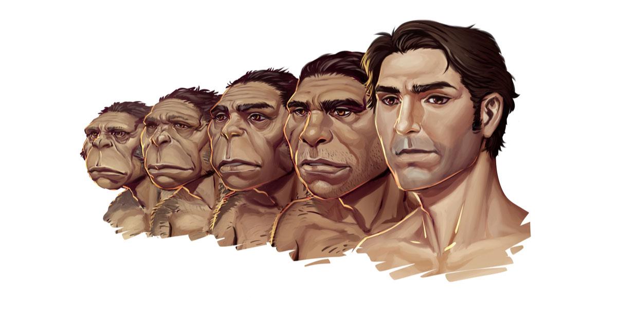 human face evolution