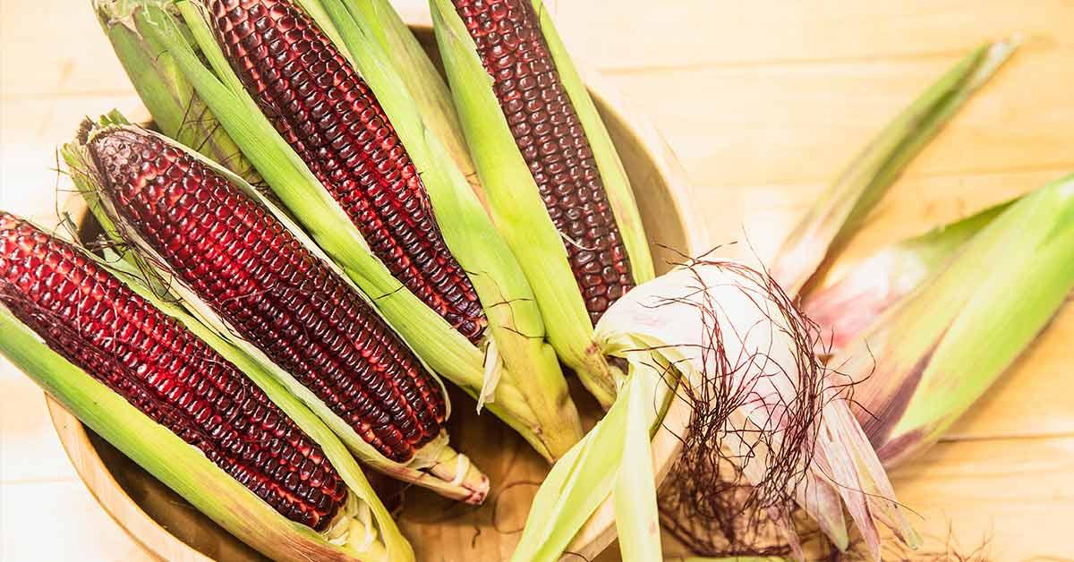 red corn in husk