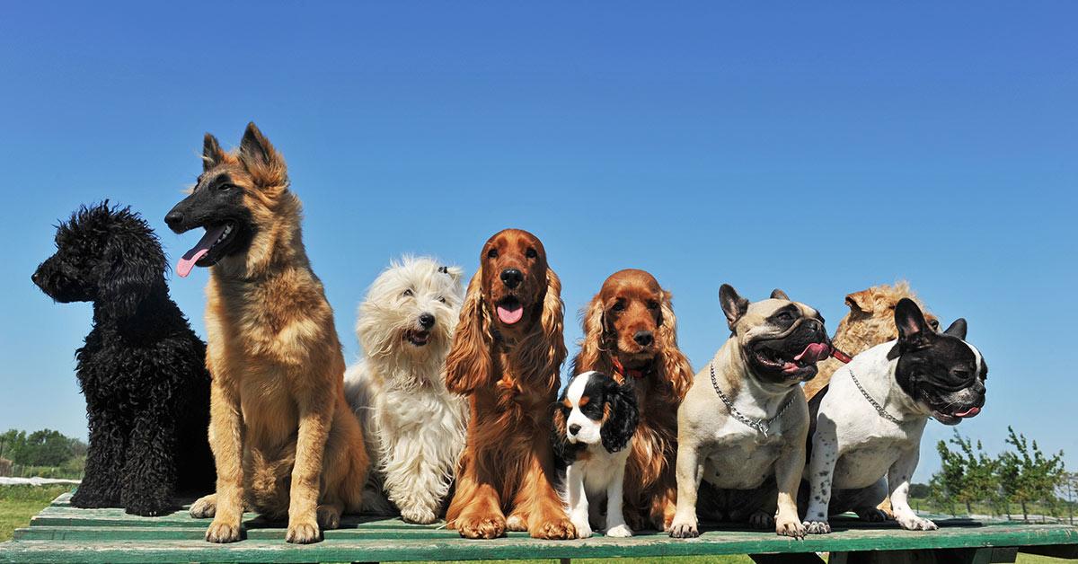 multiple breeds of dog sitting side by side